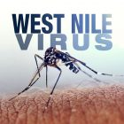 Nessuna sospensione dalle donazioni a causa del West Nile Virus
